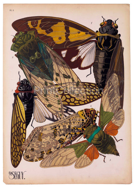 Insects, Plate 2 by E.A. Seguy