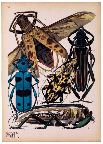 Insects, Plate 3 by E.A. Seguy