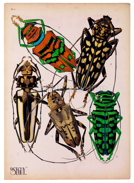 Insects, Plate 4 by E.A. Seguy