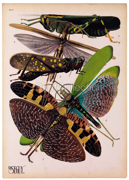 Insects, Plate 8 by E.A. Seguy