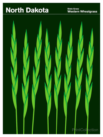 North Dakota Western Wheatgrass