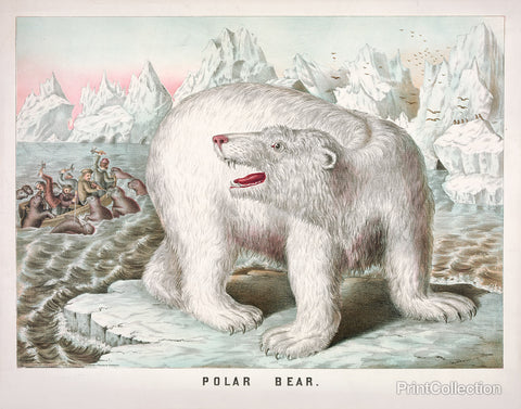 Petrified Polar Bear
