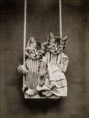 Swinging with Cats