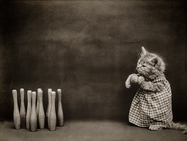 Ten Pins, Bowling with Cats