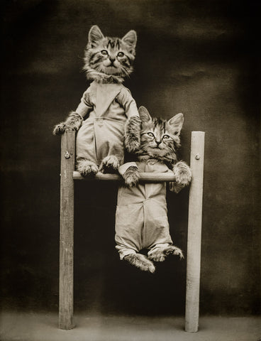 The Acrobats with Cats