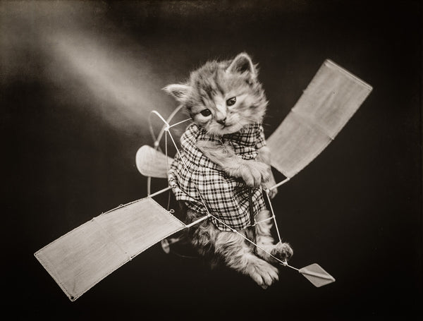 The Aviator with Cats