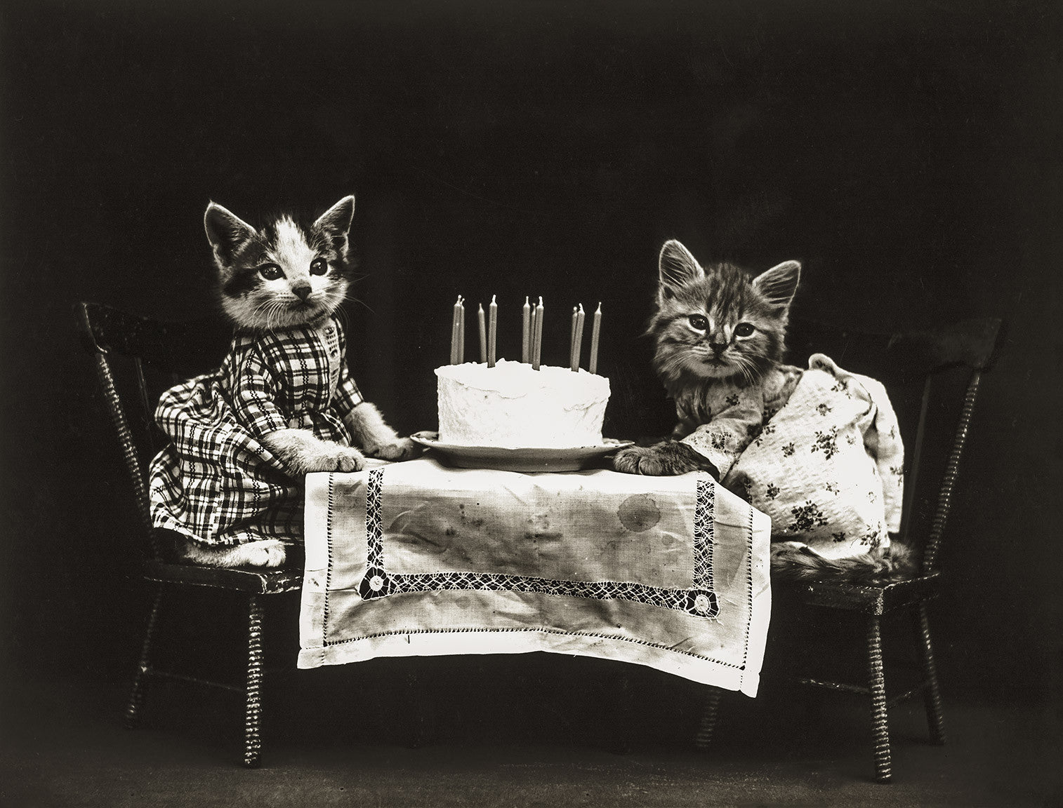 Print Collection The Birthday Cake with Cats