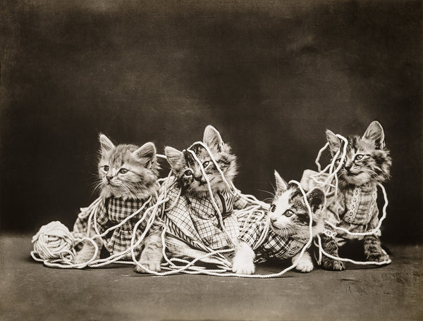 The Entanglement, with Cats
