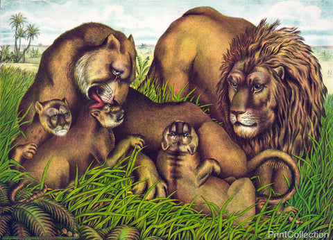 The Lion Family