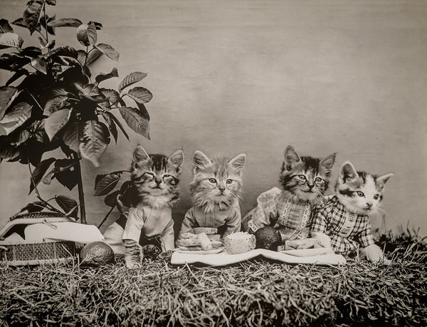 The Picnic with Cats