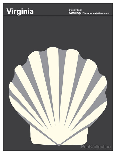 Virginia Scallop