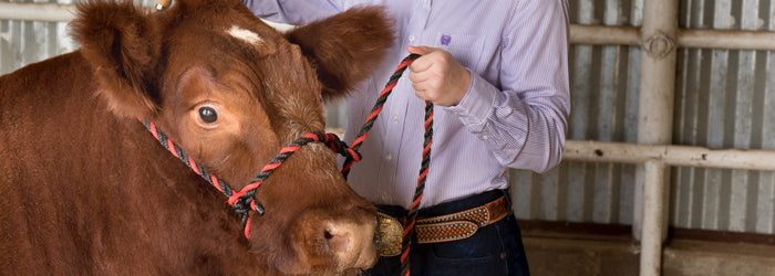 10 Stock Fitting Show Must-Haves for All Your Cattle Fitting Needs