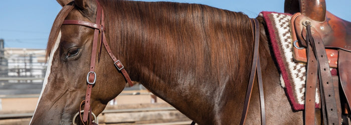 Summer Solutions for the Horse Owner