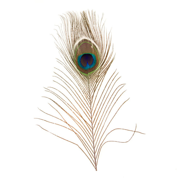 Peacock Eye Feather Hat Accent