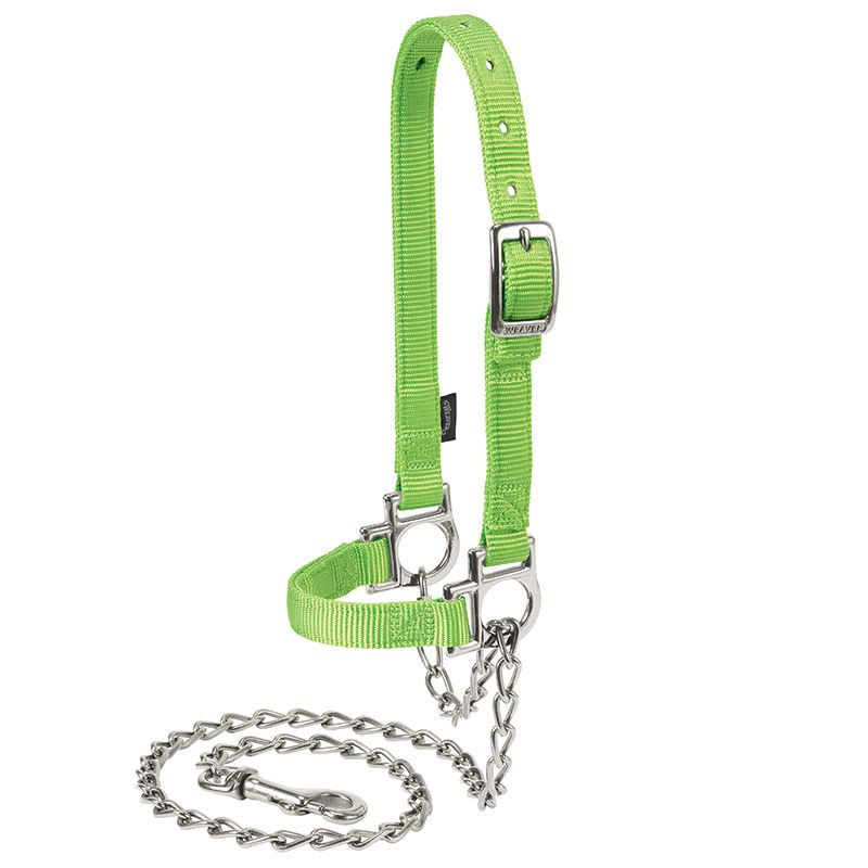 Weaver Leather Nylon Adjustable Sheep Halter with Chain Lead Lime