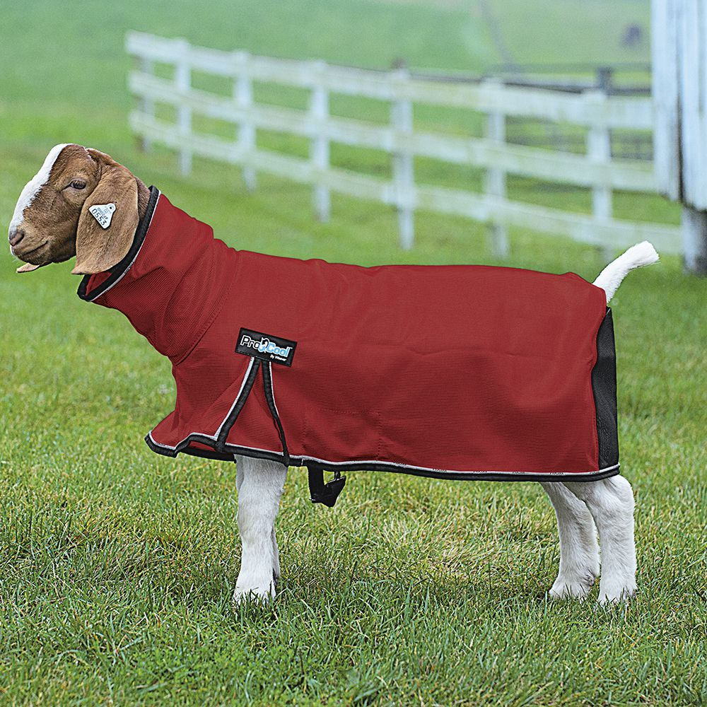 Weaver Leather ProCool Mesh Goat Blanket XSmall Red