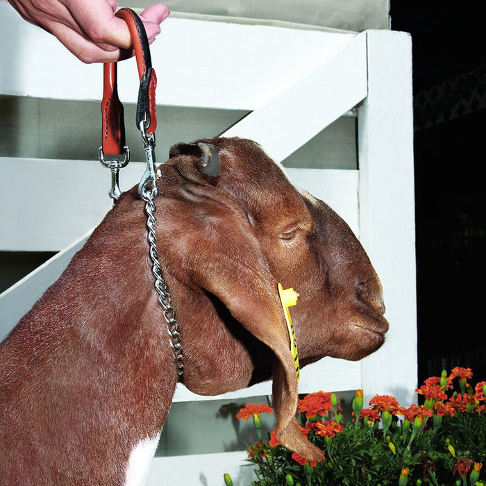 Weaver Leather Goat 24in. Leather and Chain Collar