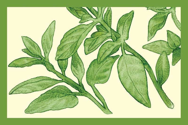 oregano ointment sample recommendations Product-specific guidances arranged by active ingredient ointment, augmented: 018741: 2/2018 bimatoprost bioequivalence recommendations for specific products.