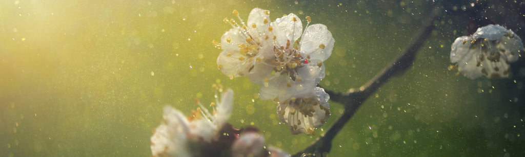 6 Natural approaches to help combat hay fever