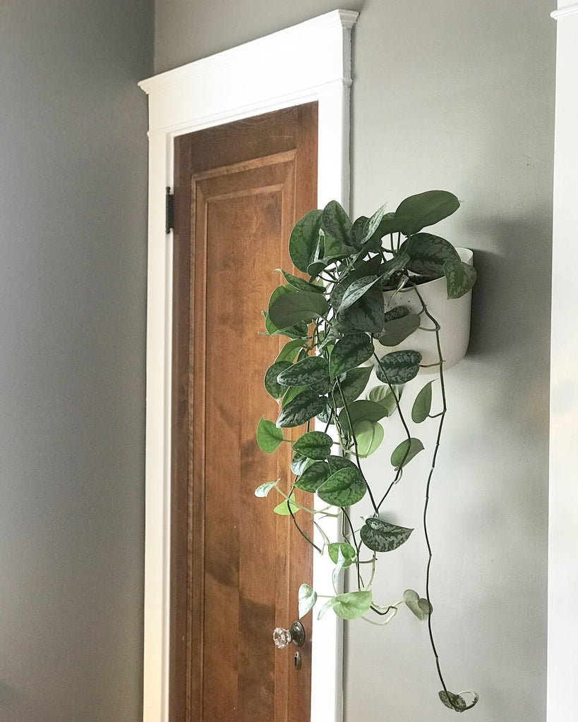 Eco Wall Planter (plant not included)