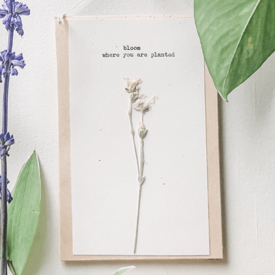 bloom where you are planted typed in typewriter font on white paper, mounted on birch wood and paired with a pressed flower. handmade décor by flora & phrase