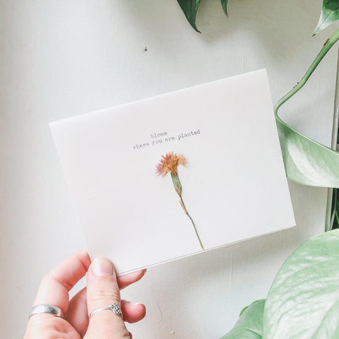 bloom where you are planted typed in typewriter font on a white greeting card, paired with a pressed flower. handmade card by flora & phrase
