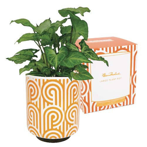 large-plant-pot-turnabouts-orange