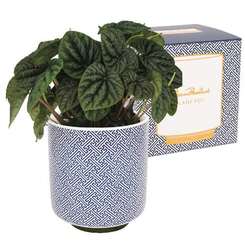 large-plant-pot-chinese-key-blue