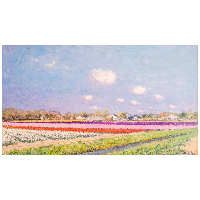 Niek van der Plas, The Tulip Field