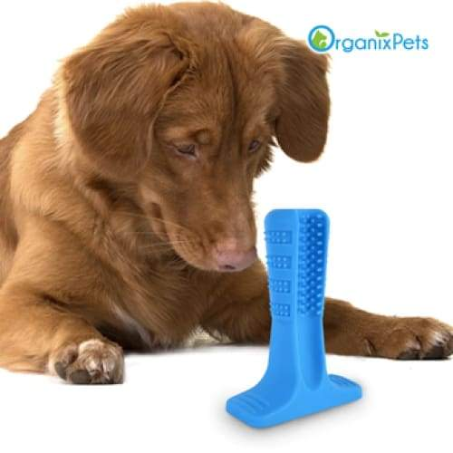 Dog Toothbrush - Helps Prevent Dog Gum Disease - Blue / L
