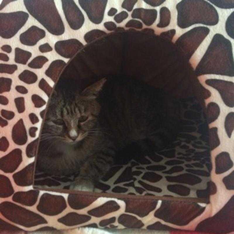 Quirky Pet Cave Bed