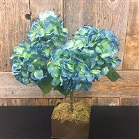 Garden Hydrangea Bush in Teal