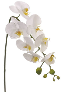 "24"" Phalaenopsis Spray in White"