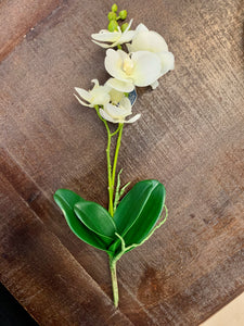 Phalaenopsis Spray in White