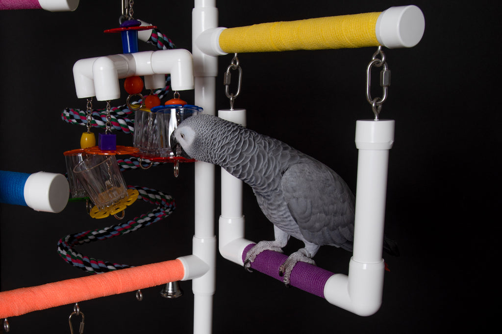 THE SUPER INDULGER Floor-Version: African Greys & Medium Birds