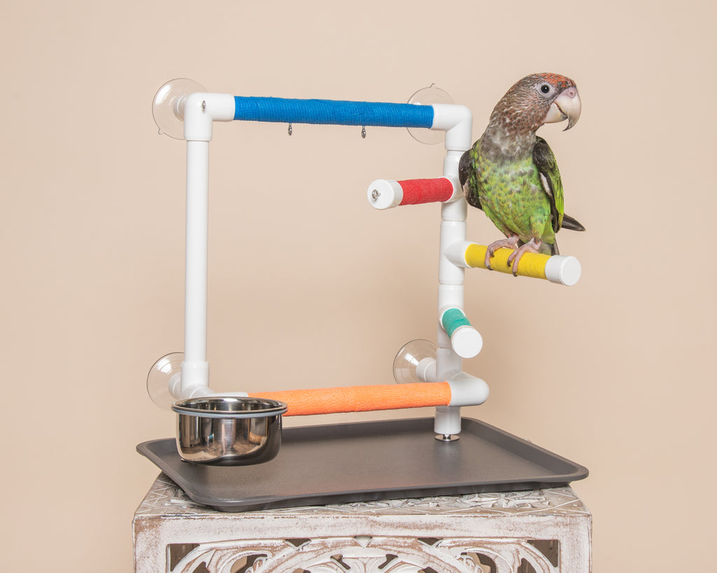 THE OBSERVER - Window Play Gym for Small and Medium Birds