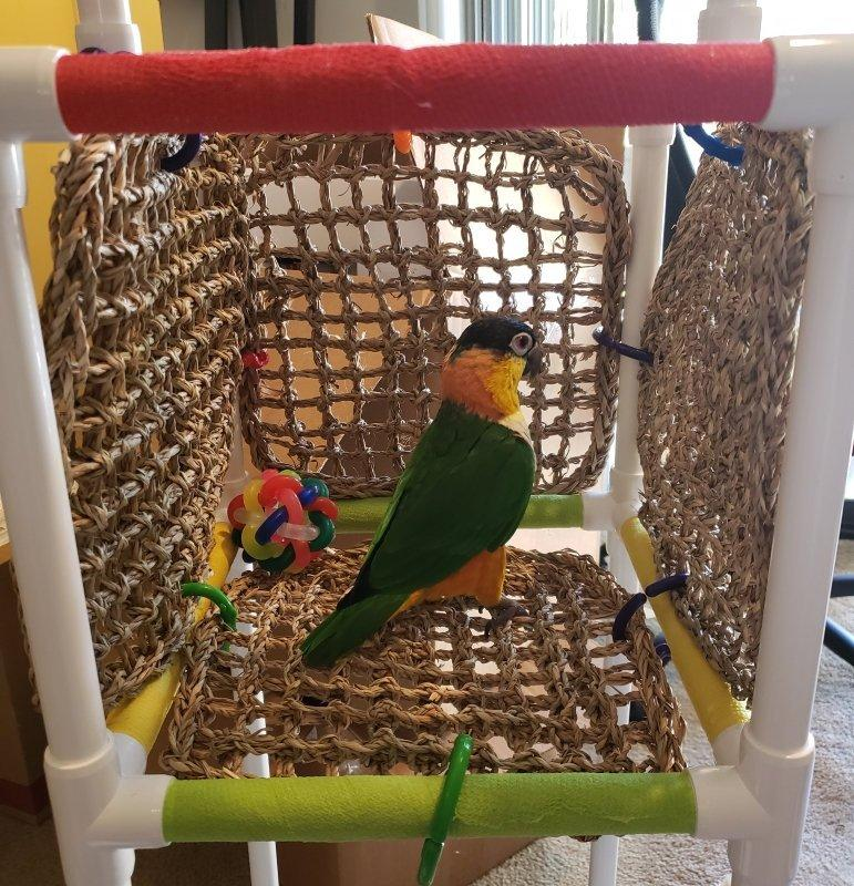 THE INDULGER Floor-Version With Seagrass Mats: Play Gym and Stand for Small and Medium Parrots