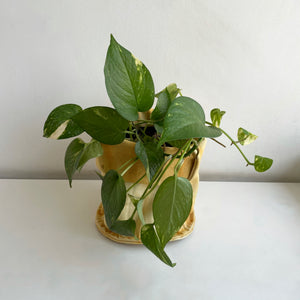 Cotton Canvas Planter