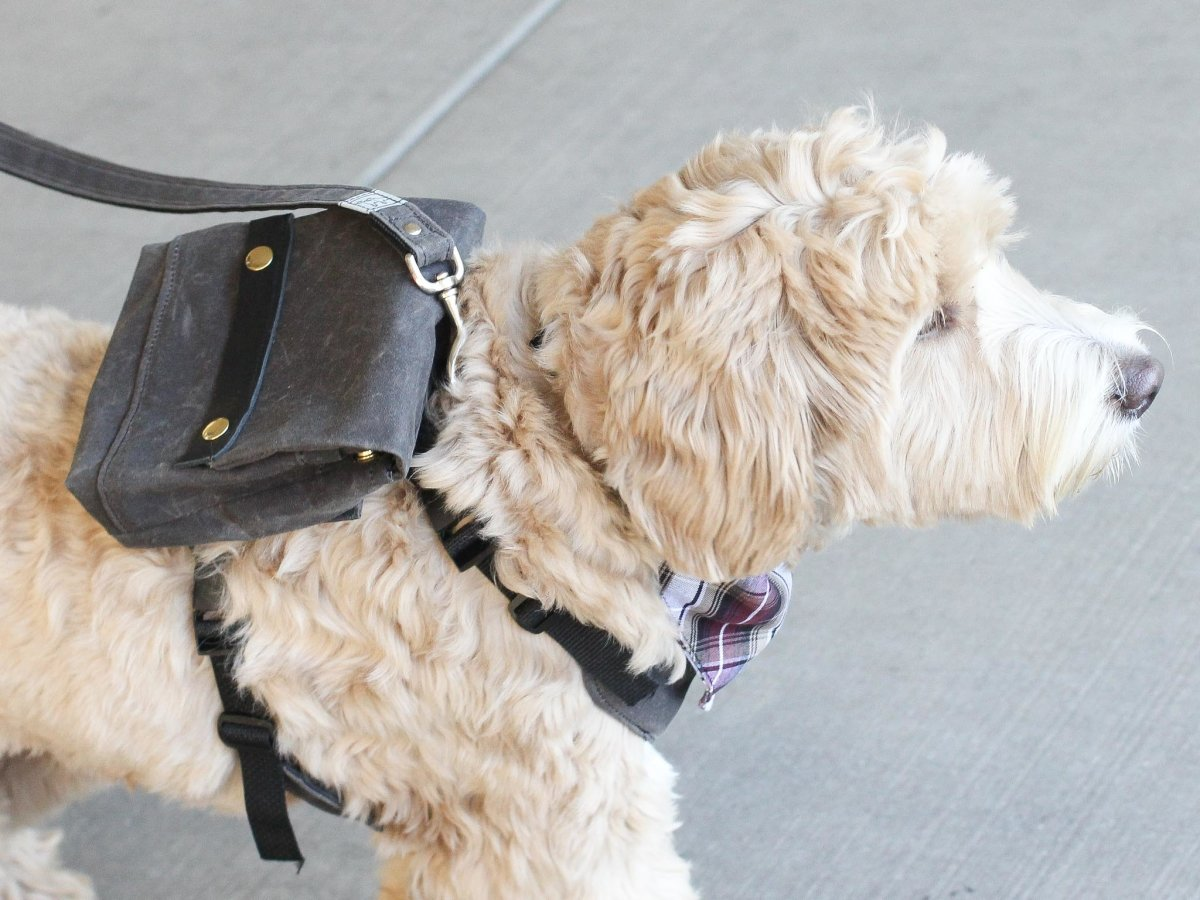 Product Spotlight: Commuter Backpack | Wag Theory