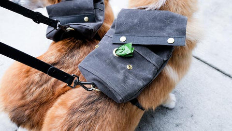 close up of dog backpacks