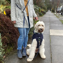 woman standing with dog wearing a crossbody leash