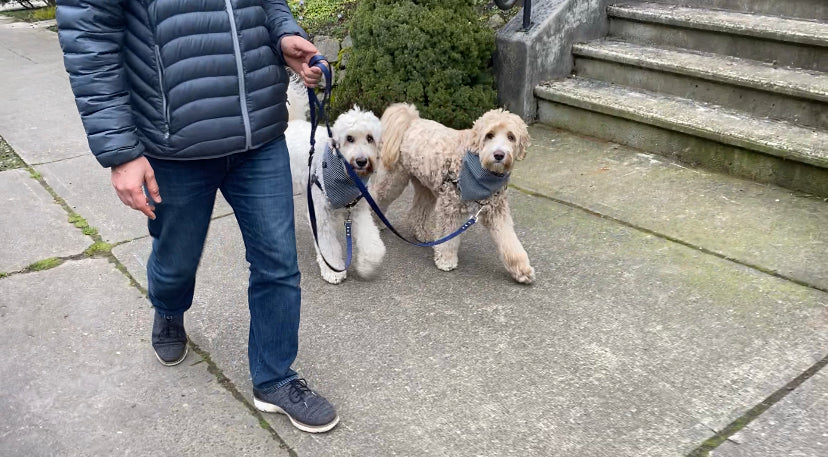 man walking dogs with wag theory leashes
