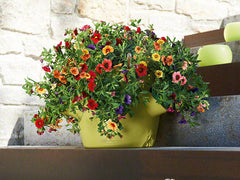 Cascadino All In One Planter