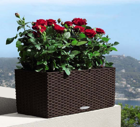 Balconera Cottage Planter