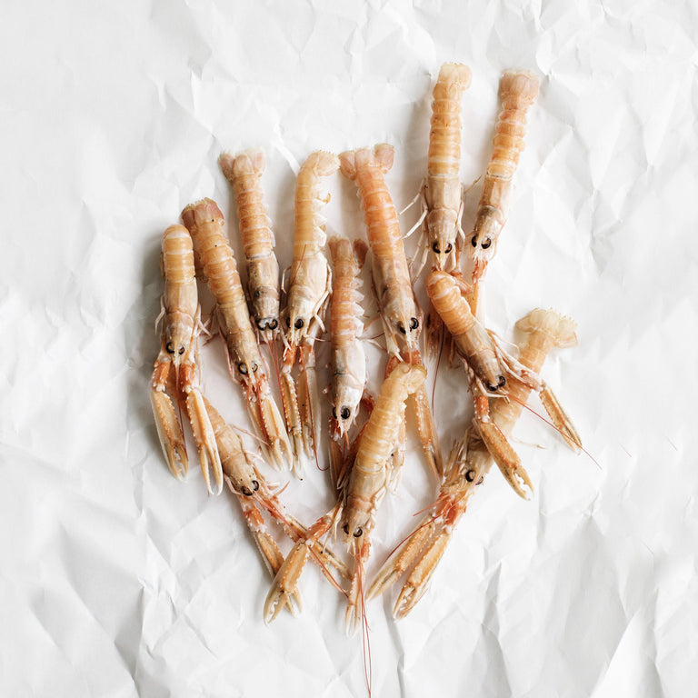 Norway Lobster (Langoustines)