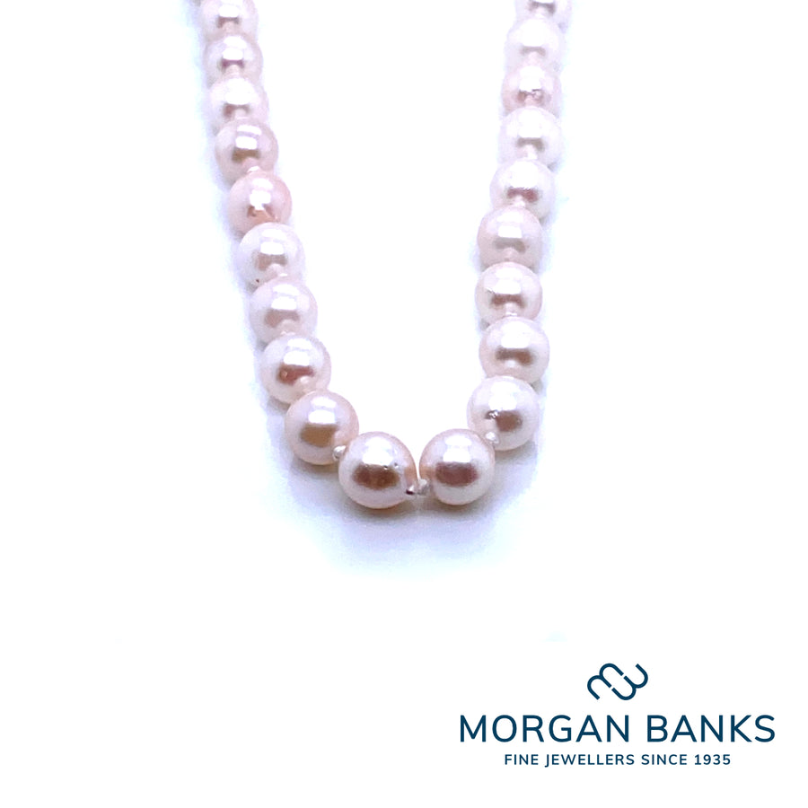 Acoya Pearl necklace gold clasp