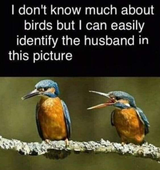 For all you bird watchers out there...