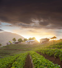 Load image into Gallery viewer, Thailand strawberry farm