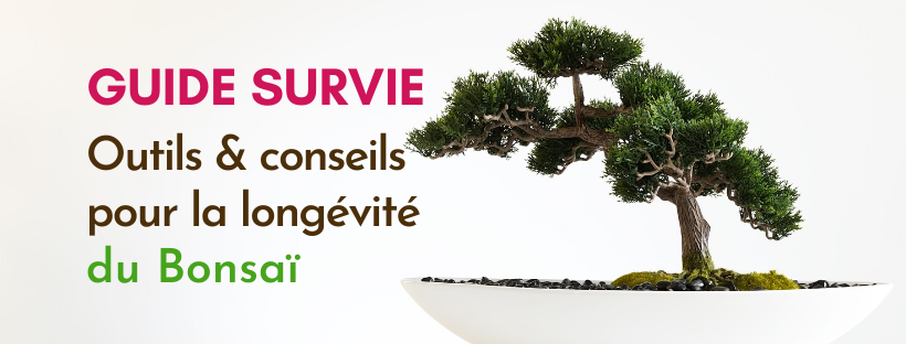 Guide de Survie : L'arrosage du Bonsaï