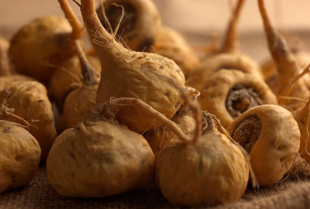 MACA PERUANA ¿BENEFICIOS?